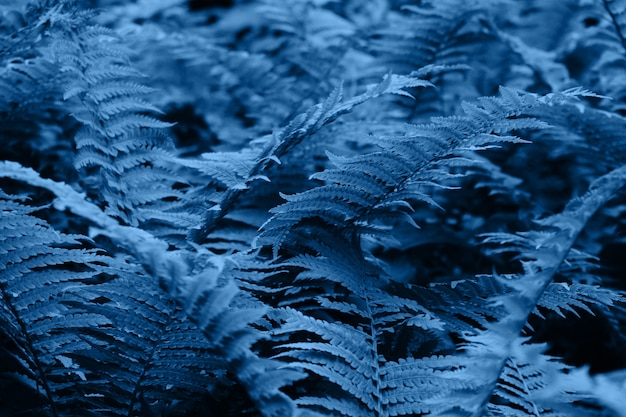 2020年の色-クラシックブルー。森の中のシダ。自然な背景