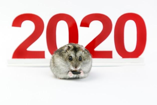新年。カレンダー上のマウスの2020年。