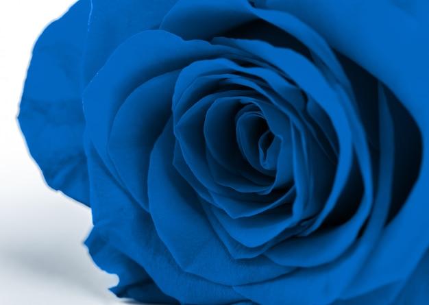 青いバラ。2020年の古典的な青いトーンの色