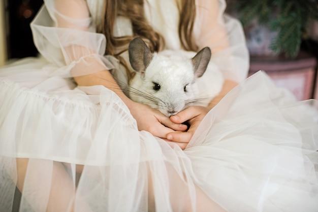 Счастливый китайский новый год 2020 год крысы. портрет милая белая шиншилла на фоне елки