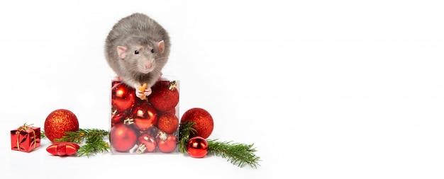 Баннер. очаровательная крыса дамбо с елочными украшениями. 2020 год крысы. веточки ели, красные елочные шары. китайский новый год.