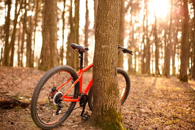 29インチの車輪が付いたオレンジ色の自転車が、太陽の下で森の中の木の近くに立っています。