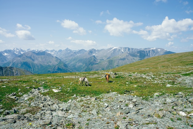 雪に覆われた大きな山の中で緑の高山草原に2頭の美しい馬が放牧しています。馬と高原の自然の素晴らしい風光明媚な風景。群馬と巨大な氷河がある鮮やかな山の風景。