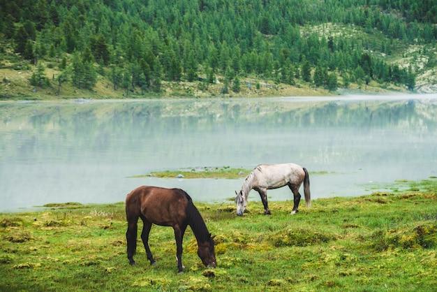 マウンテンバレーの川の近くの牧草地で2頭の馬が放牧します。山の湖の近くの草原に白と茶色の馬。灰色と茶色の馬の美しい風景。反対側の川岸の丘の上の森。