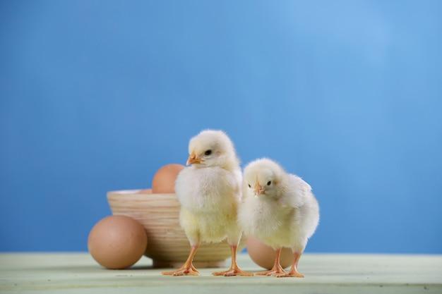 2つのひよこ、卵とボウル