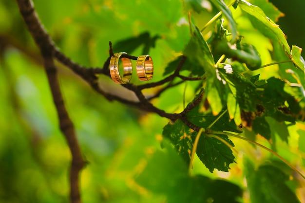 背景がぼやけている枝に2つの結婚指輪