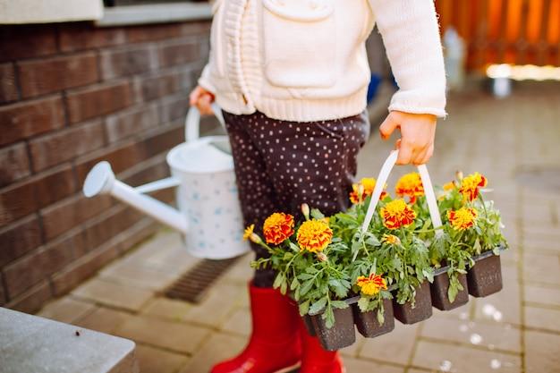 彼女の裏庭に滞在しているマリーゴールドの2つのパックを持つ少女