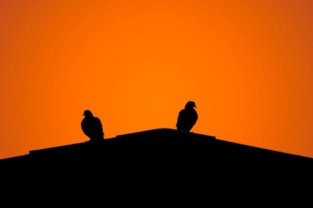 屋根の上に2つの鳩のシルエット。