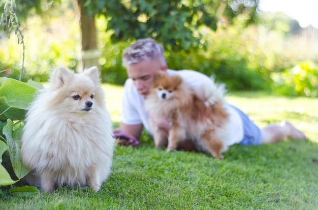 2匹の犬を持つ男。ジャーマンスピッツがオーナーを守ります。ポメラニアンスピッツをなでる男。フレンドリーなペット。