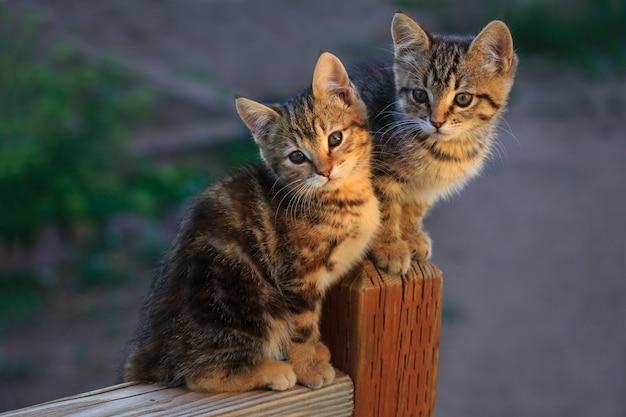 ポーチの手すりに2匹の子猫