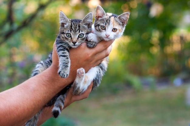 ぼやけた緑ボケ表面を持つマンの手に2つの小さな美しい子猫