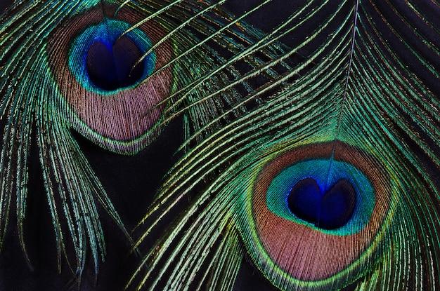 黒い壁に2つの孔雀の羽