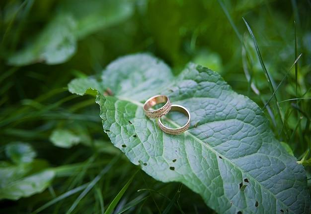葉の植物に2つの黄金の結婚指輪があります。