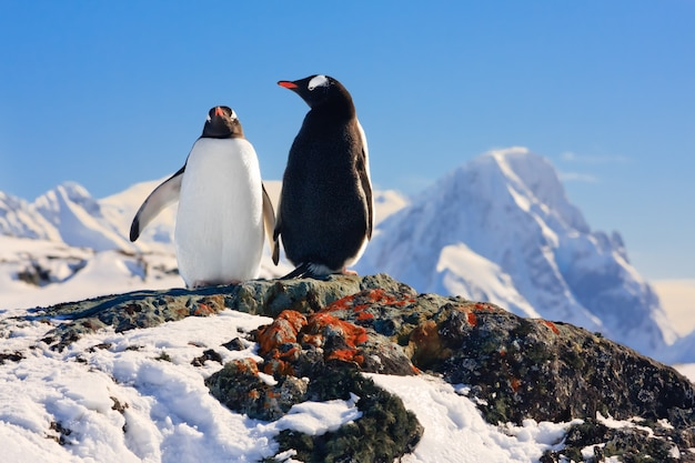 夢を見ている2つのペンギン