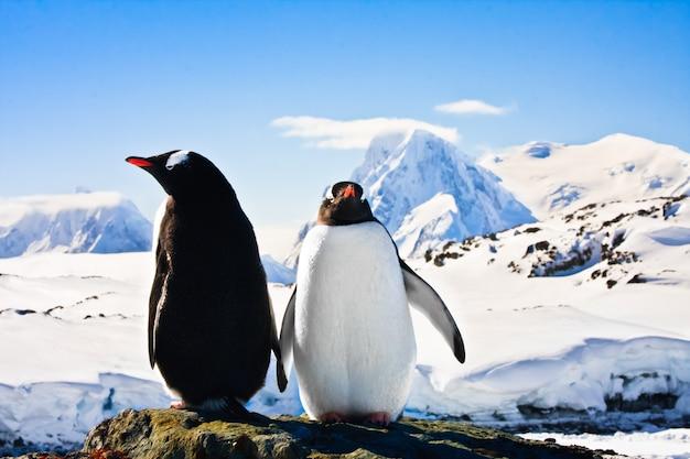 2つのペンギン