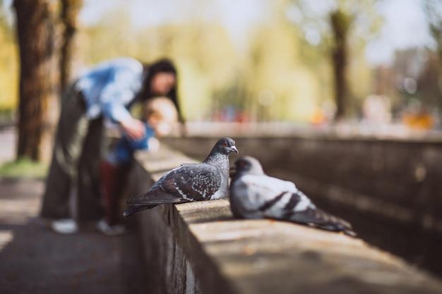公園の石造りの塀の上に座っている2つの鳩