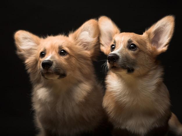 2つの子犬。