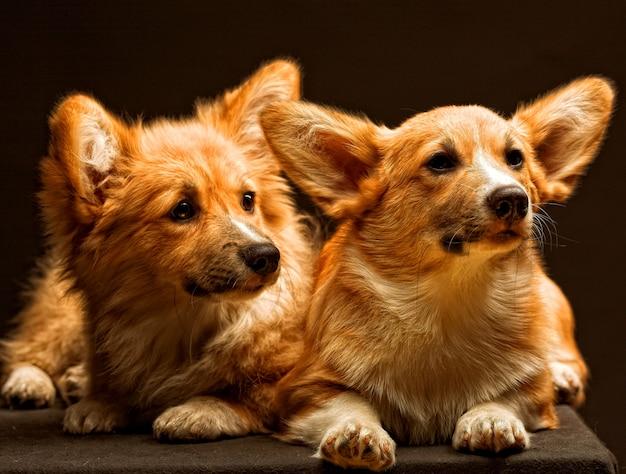 2匹の愛らしい子犬