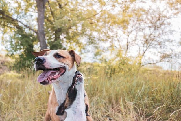 散歩で2人の最高の毛皮のような友人。成長したスタッフォードシャーテリアと遊び心のある子犬が草原に座る