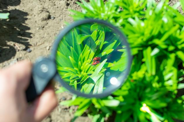 庭の植物の上に座っている2つの交尾バグを虫眼鏡で見る