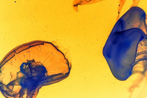 黄色の背景に2つの青いクラゲの美しい芸術