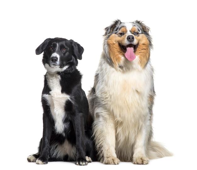 白い背景の前に座っている2匹の犬