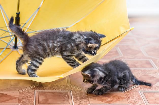 2つの小さな縞模様の子猫が傘の周りで遊んでいます。傘を持った子猫