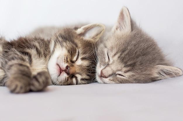 2匹の子猫が眠り、抱き合っています。良い夢を