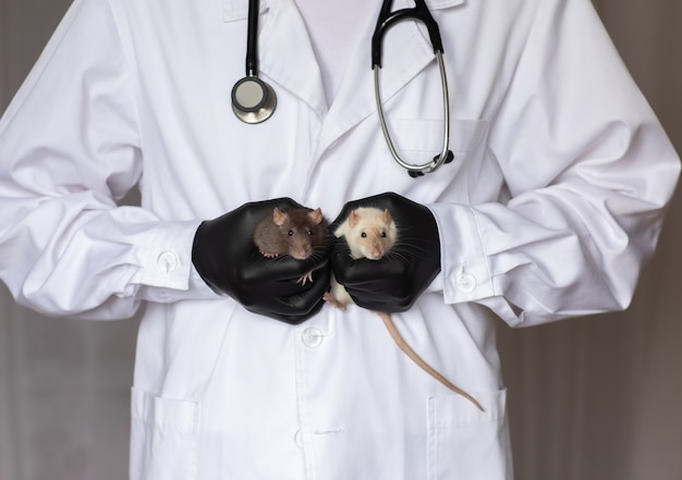 2つのラットを保持している白いスモックと黒い医療用手袋の男性獣医医師