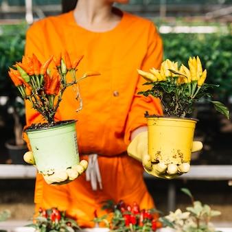 赤と黄色の唐辛子で2つの鉢植えの植物を持っている女性