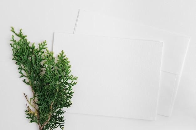 白い背景で隔離された2つの封筒とシダーの葉