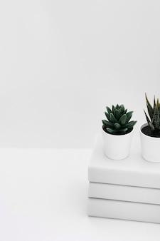 白い背景に隔離された本の上に2つの鉢植えされたサボテン植物
