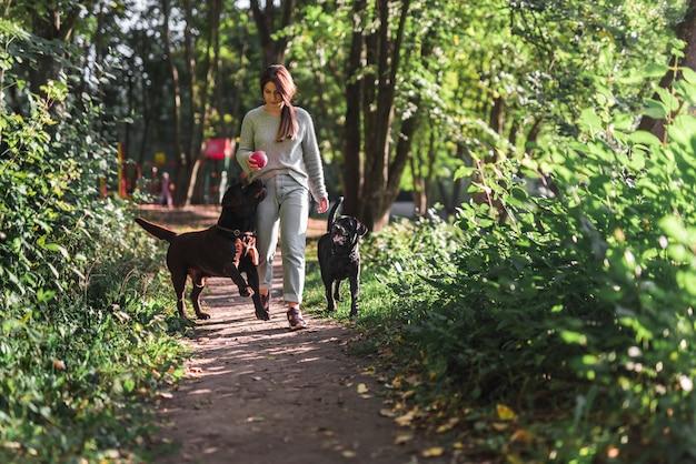 公園で歩道で彼女の2つのラブラドールと一緒に歩いている女性の正面図