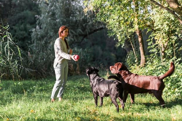 女性と彼女の2つのラブラドールズは公園で草の中のボールで遊ぶ
