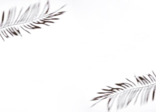 白い背景の上の2つのヤシの葉