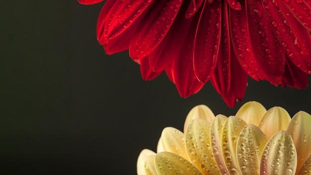 2つの異なる花のクローズアップ