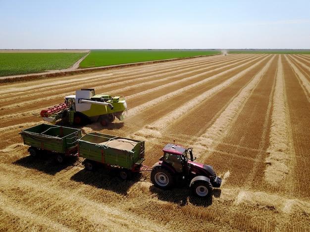 晴れた日に麦畑で働く2つのトレーラーと収穫機とトラクターの飛行ドローンから鳥瞰図。