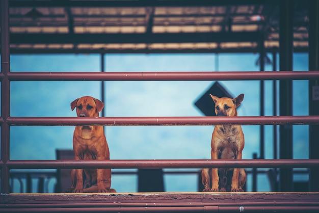 2匹の犬が家に座って、ヴィンテージフィルター画像
