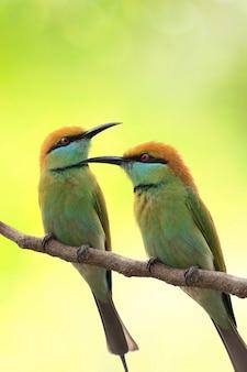 枝に2羽の鳥