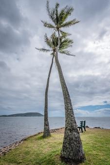 ハワイ州オアフ島のカワイクイビーチパークの2つの背の高いヤシの木