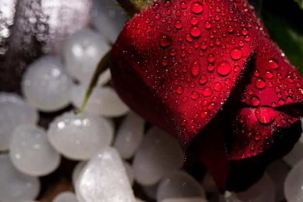 バラ、バレンタインデー、愛の2月