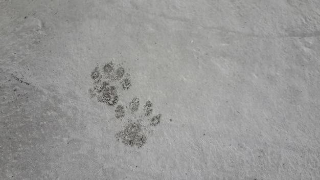 油で染められた猫の足は、汚れ、猫の足、2面としてセメントの床に足を踏み入れた。