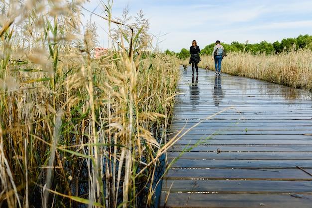 2人の女性が湖の木の歩道橋で犬を散歩させます。