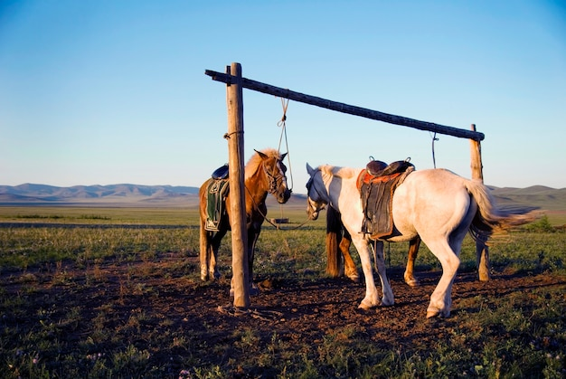 2頭の馬がモンゴルの郵便局に縛られた