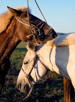 お互いに抱き合っている2頭の馬