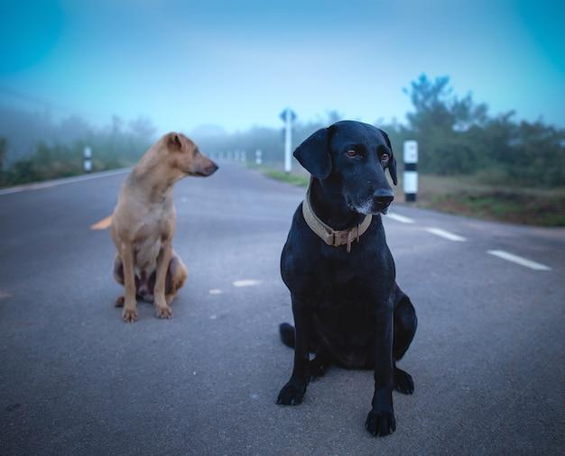 道路上の2匹の犬