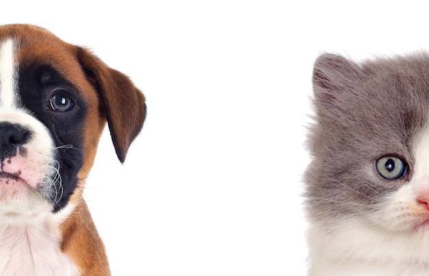 2つの美しい子犬