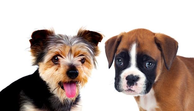 2つの美しい犬