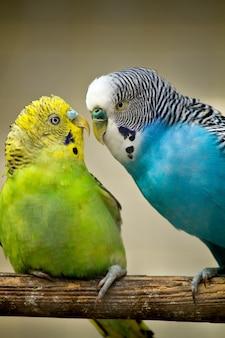 2つのかわいい鳥