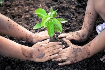 2人の少女が若い木を植えています。